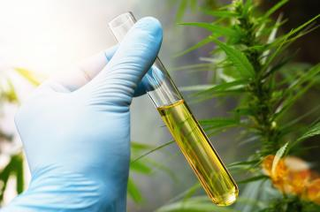 scientist hand holding a test tube of cbd biological and ecological herbal pharmaceutical cbd oil at a Hemp farm. Concept of herbal alternative medicine, cbd oil, pharmaceutical industry- Stock Photo or Stock Video of rcfotostock | RC-Photo-Stock