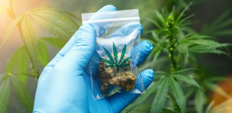 scientist hand Holding and showing Cannabis buds in a plastic zip bag. Concept of herbal alternative medicine, cbd oil, pharmaceutical industry or illegal drug use- Stock Photo or Stock Video of rcfotostock | RC-Photo-Stock