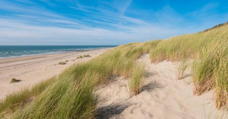 Sea dunes with ocean view : Stock Photo or Stock Video Download rcfotostock photos, images and assets rcfotostock | RC-Photo-Stock.:
