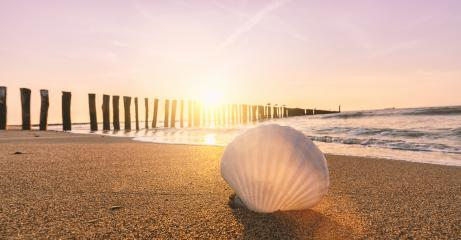 Sea shell on beach over sunset seascape background- Stock Photo or Stock Video of rcfotostock | RC-Photo-Stock