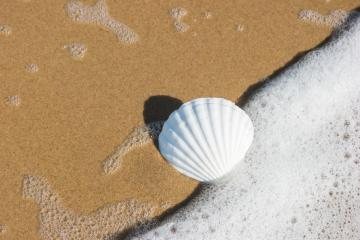 seashell on the beach : Stock Photo or Stock Video Download rcfotostock photos, images and assets rcfotostock | RC-Photo-Stock.: