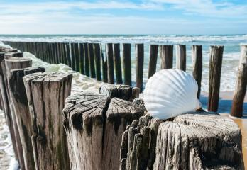 seashell on wooden poles on the beach in Zeeland, Holland : Stock Photo or Stock Video Download rcfotostock photos, images and assets rcfotostock | RC-Photo-Stock.: