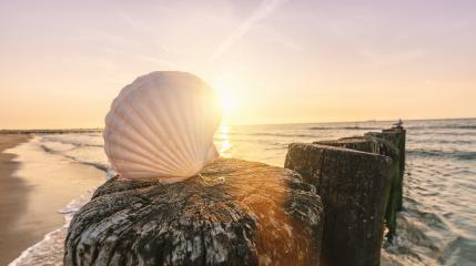 Shell on a sandy beach at sunset- Stock Photo or Stock Video of rcfotostock | RC-Photo-Stock