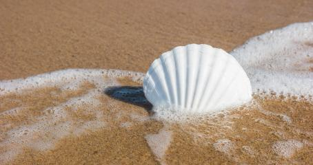 Shell on the beach : Stock Photo or Stock Video Download rcfotostock photos, images and assets rcfotostock | RC-Photo-Stock.: