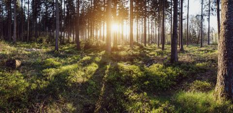Silent Forest at spring with beautiful bright sun panroama- Stock Photo or Stock Video of rcfotostock | RC-Photo-Stock