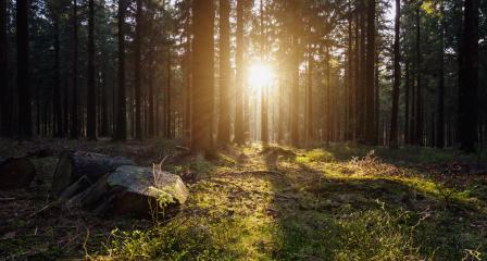 Silent Forest in spring with beautiful bright sun light- Stock Photo or Stock Video of rcfotostock | RC-Photo-Stock