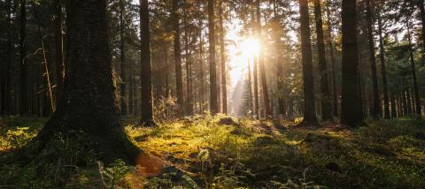 Silent Forest in spring with beautiful bright sun rays - Stock Photo or Stock Video of rcfotostock   RC-Photo-Stock