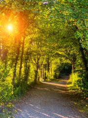 Silent Forest in spring with beautiful bright sun rays - wanderlust : Stock Photo or Stock Video Download rcfotostock photos, images and assets rcfotostock | RC-Photo-Stock.: