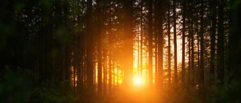 Silent Forest in spring with beautiful bright sun rays- Stock Photo or Stock Video of rcfotostock | RC-Photo-Stock