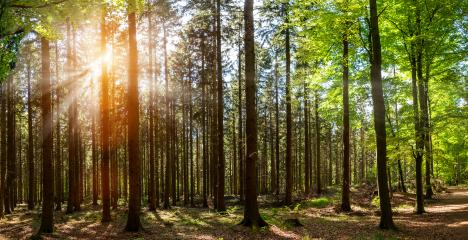 Silent Forest in spring with beautiful bright sun rays : Stock Photo or Stock Video Download rcfotostock photos, images and assets rcfotostock | RC-Photo-Stock.: