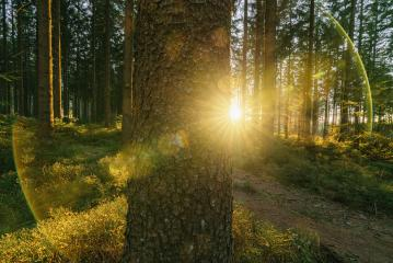 Silent Forest in spring with beautiful bright sun rays on a tree trunk - wanderlust - Stock Photo or Stock Video of rcfotostock | RC-Photo-Stock