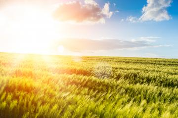 skyline and corn field - Stock Photo or Stock Video of rcfotostock | RC-Photo-Stock