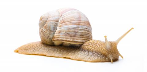 slow snail : Stock Photo or Stock Video Download rcfotostock photos, images and assets rcfotostock | RC-Photo-Stock.: