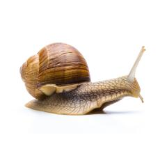 slowly snail : Stock Photo or Stock Video Download rcfotostock photos, images and assets rcfotostock | RC-Photo-Stock.: