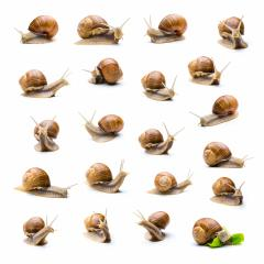 snail collage set : Stock Photo or Stock Video Download rcfotostock photos, images and assets rcfotostock | RC-Photo-Stock.: