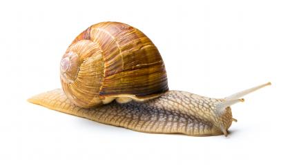 Snail crawling at snail's pace : Stock Photo or Stock Video Download rcfotostock photos, images and assets rcfotostock | RC-Photo-Stock.: