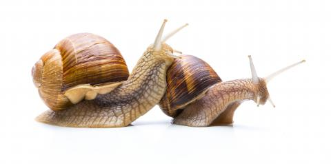 Snail Familie- Stock Photo or Stock Video of rcfotostock | RC-Photo-Stock