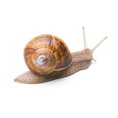 snail goes away- Stock Photo or Stock Video of rcfotostock | RC-Photo-Stock