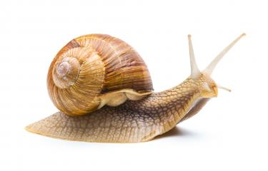 snail goes away : Stock Photo or Stock Video Download rcfotostock photos, images and assets rcfotostock | RC-Photo-Stock.:
