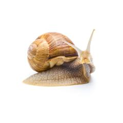 snail hunt : Stock Photo or Stock Video Download rcfotostock photos, images and assets rcfotostock | RC-Photo-Stock.: