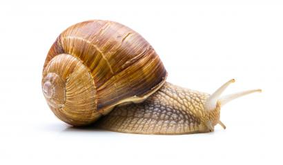 Snail is afraid : Stock Photo or Stock Video Download rcfotostock photos, images and assets rcfotostock | RC-Photo-Stock.: