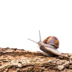 Snail looks astonished : Stock Photo or Stock Video Download rcfotostock photos, images and assets rcfotostock | RC-Photo-Stock.:
