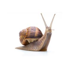 snail looks up : Stock Photo or Stock Video Download rcfotostock photos, images and assets rcfotostock | RC-Photo-Stock.: