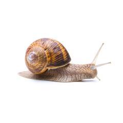 Snail Reptile- Stock Photo or Stock Video of rcfotostock | RC-Photo-Stock