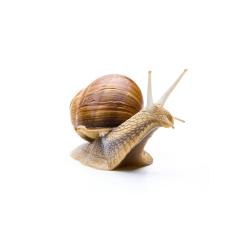 Snail with house : Stock Photo or Stock Video Download rcfotostock photos, images and assets rcfotostock | RC-Photo-Stock.:
