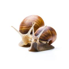 snails- Stock Photo or Stock Video of rcfotostock | RC-Photo-Stock