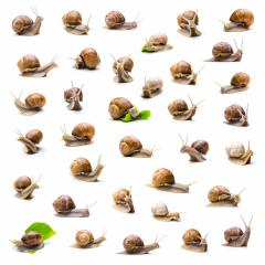 snails collection- Stock Photo or Stock Video of rcfotostock | RC-Photo-Stock