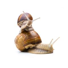 snails family  : Stock Photo or Stock Video Download rcfotostock photos, images and assets rcfotostock | RC-Photo-Stock.: