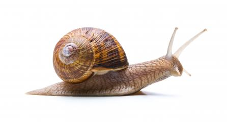 snails hike : Stock Photo or Stock Video Download rcfotostock photos, images and assets rcfotostock | RC-Photo-Stock.: