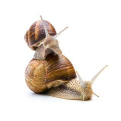 Snails Teamwork : Stock Photo or Stock Video Download rcfotostock photos, images and assets rcfotostock | RC-Photo-Stock.: