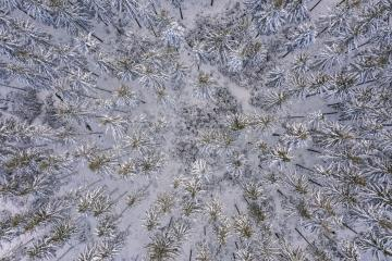 Snowy forrest captured from above with a drone- Stock Photo or Stock Video of rcfotostock | RC-Photo-Stock