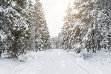 snowy winter forest- Stock Photo or Stock Video of rcfotostock | RC-Photo-Stock