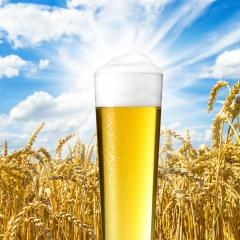 Sommer bier mit tau tropfen : Stock Photo or Stock Video Download rcfotostock photos, images and assets rcfotostock | RC-Photo-Stock.: