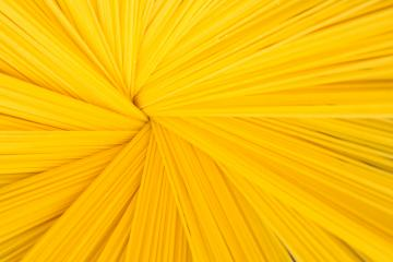 Spaghetti  noodles : Stock Photo or Stock Video Download rcfotostock photos, images and assets rcfotostock | RC-Photo-Stock.: