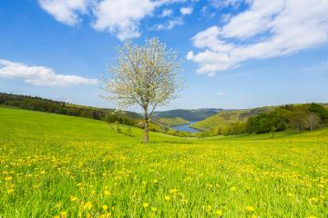 Sping view in the eifel landscape in germany with Lake Rursee : Stock Photo or Stock Video Download rcfotostock photos, images and assets rcfotostock | RC-Photo-Stock.: