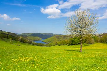 Sping view in the eifel landscape in germany with Lake Rursee and tree : Stock Photo or Stock Video Download rcfotostock photos, images and assets rcfotostock | RC-Photo-Stock.: