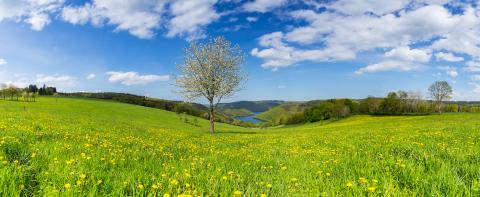 Sping view with dandelion meadow in the eifel landscape in germany with Lake Rursee panorama : Stock Photo or Stock Video Download rcfotostock photos, images and assets rcfotostock | RC-Photo-Stock.: