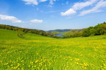 Sping view with dandelion meadow in the eifel landscape in germany with Lake Rursee : Stock Photo or Stock Video Download rcfotostock photos, images and assets rcfotostock | RC-Photo-Stock.: