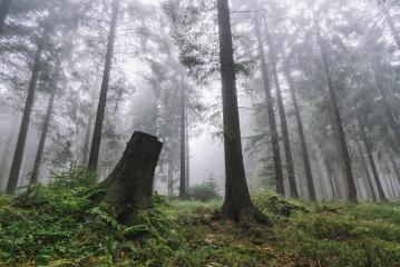 Spooky light in foggy forest- Stock Photo or Stock Video of rcfotostock | RC-Photo-Stock