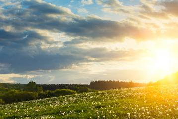 Spring meadow with explosive sunlight- Stock Photo or Stock Video of rcfotostock | RC-Photo-Stock