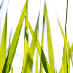 Spring or summer and grass field with white background- Stock Photo or Stock Video of rcfotostock | RC-Photo-Stock