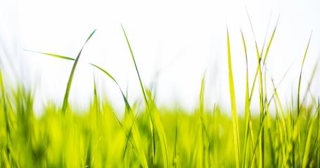 Spring or summer and grass field with white background : Stock Photo or Stock Video Download rcfotostock photos, images and assets rcfotostock | RC-Photo-Stock.:
