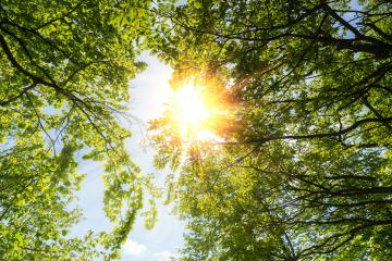 spring sun shining through the treetop with blue sky- Stock Photo or Stock Video of rcfotostock | RC-Photo-Stock
