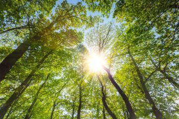 spring sunlight illuminating a deep forest  : Stock Photo or Stock Video Download rcfotostock photos, images and assets rcfotostock | RC-Photo-Stock.: