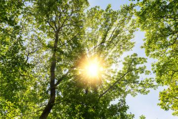 spring treetops with warm sunlight  : Stock Photo or Stock Video Download rcfotostock photos, images and assets rcfotostock | RC-Photo-Stock.: