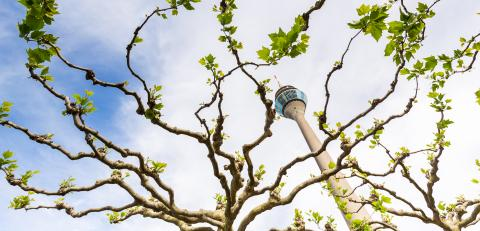 spring view of the Tv Tower in Dusseldorf, germany : Stock Photo or Stock Video Download rcfotostock photos, images and assets rcfotostock | RC-Photo-Stock.: